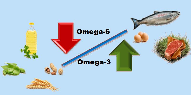 5. Acid béo Omega-6 1